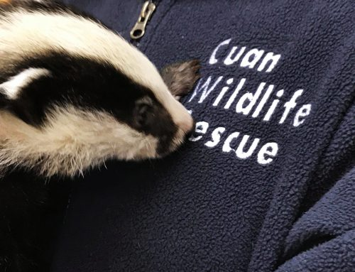 Introducing The Cuan Wildlife Rescue Lottery